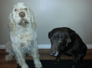 Elvis and Sophie in need of a bath before their therapy visits