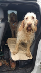The Waterwoof Pad protects car seats from the smell and mess of wet dogs